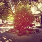 Hot day for reading outside, Princeton http instag