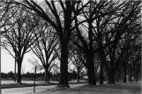 Washington Road Elm Allée leading to Princeton by