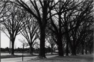 Washington Road Elm Allée leading to Princeton by