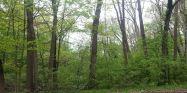 woods princeton